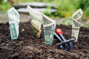 Picture of money growing in garden